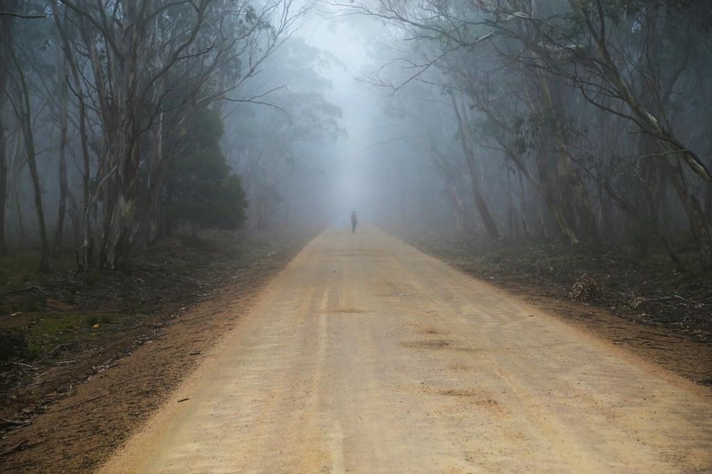 fog-687254_1280