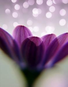 DFL flower